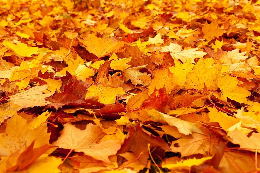 Картинки листьев желтых, фотошопе для